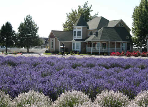 Purple Ridge Lavender Farm Victorian House