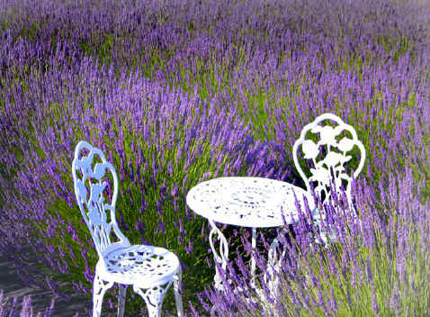 Table & Chairs at Purple Ridge Lavender Hermiston Oregon