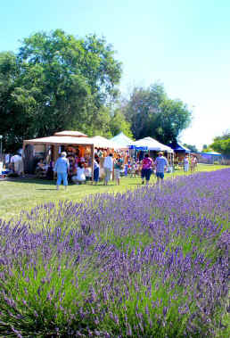 Vendors at Purple Ridge Lavender Hermiston Oregon 2011